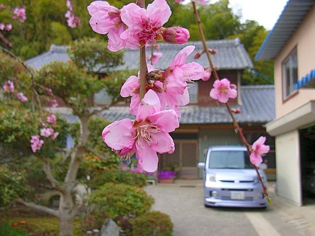 2006-Spring151.jpg