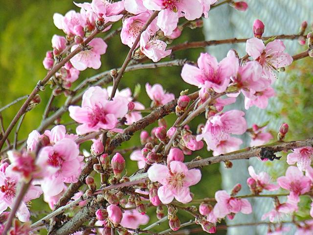2006-Spring152.jpg