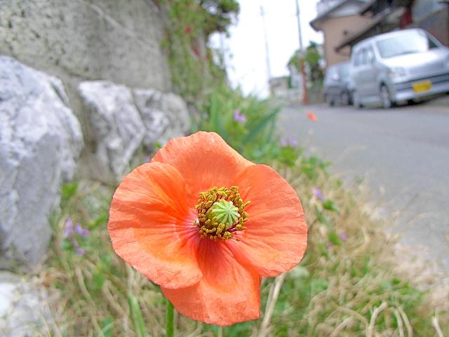 2007-Spring001.jpg