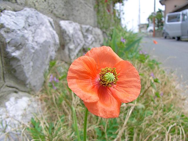 2007-Spring002.jpg