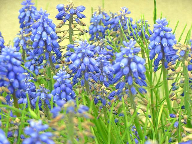2007-Spring003.jpg
