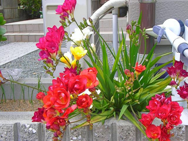 2007-Spring007.jpg