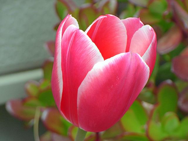 2007-Spring008.jpg