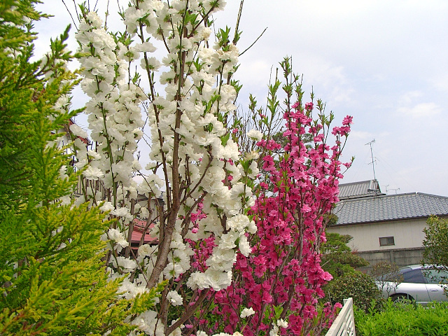 2007-Spring011.jpg