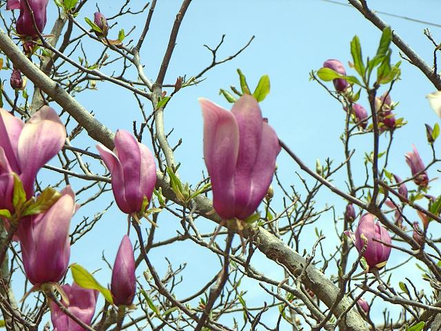 2007-Spring015.jpg