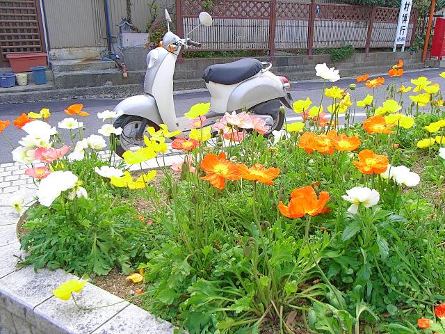 2007-Spring017.jpg
