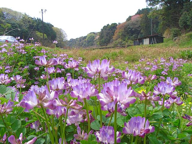 2007-Spring033.jpg