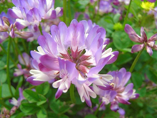 2007-Spring034.jpg