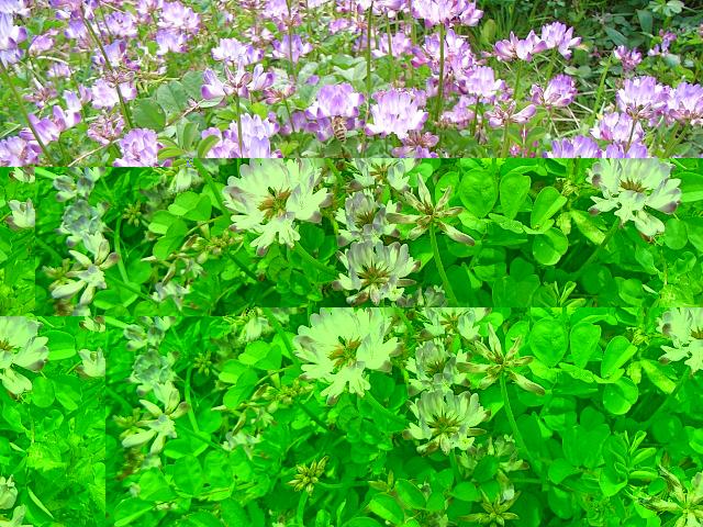 2007-Spring037.jpg