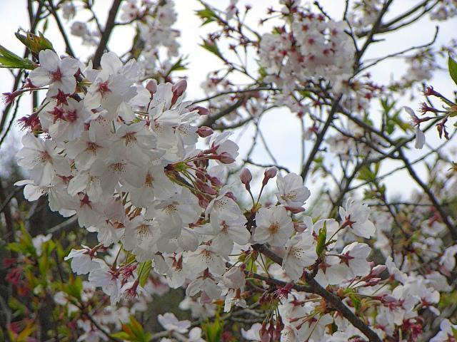 2007-Spring038.jpg