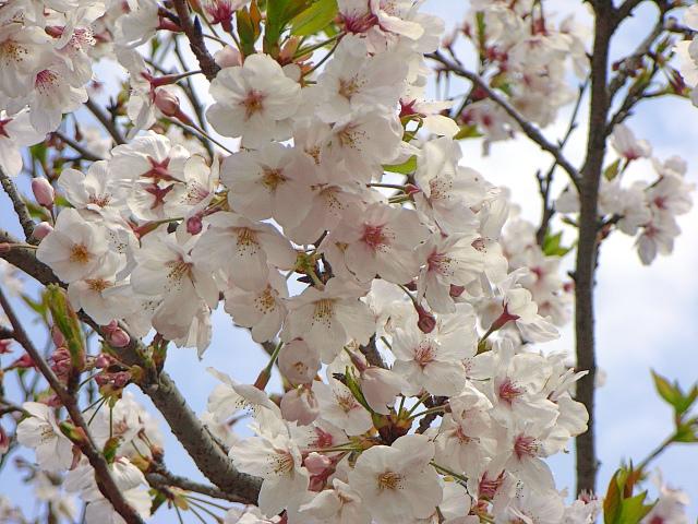 2007-Spring041.jpg