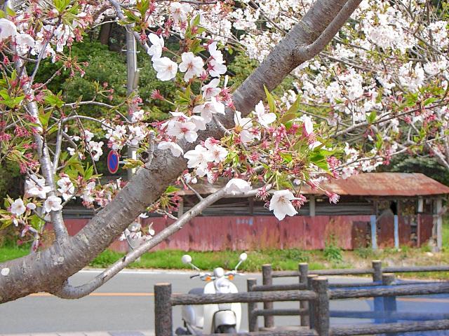 2007-Spring042.jpg