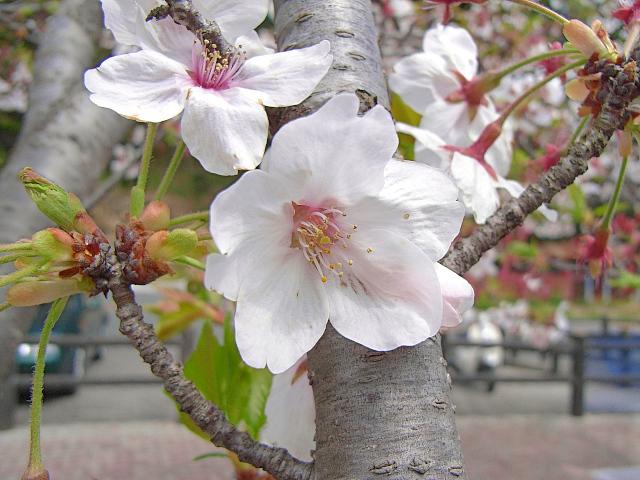 2007-Spring043.jpg