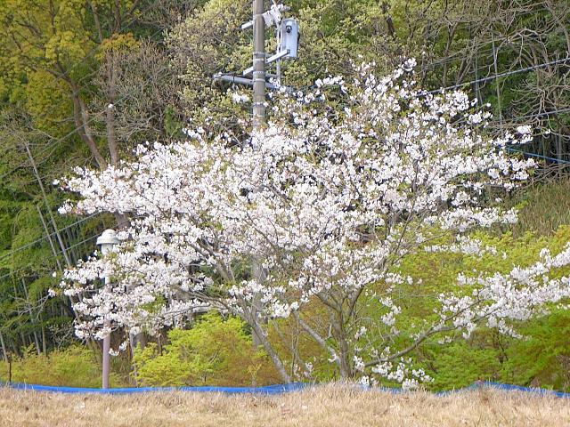 2007-Spring044.jpg