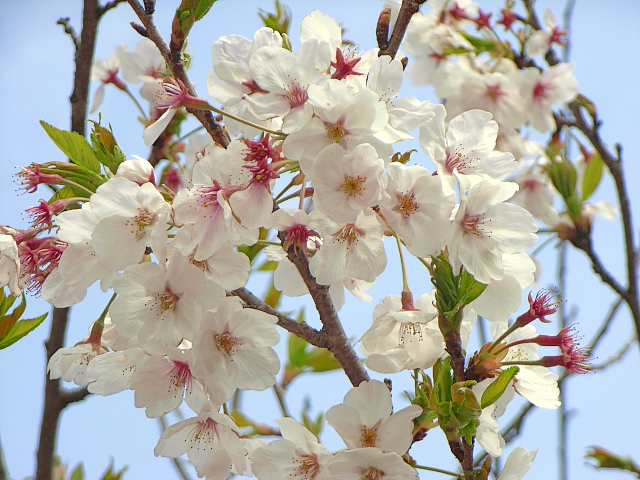 2007-Spring045.jpg