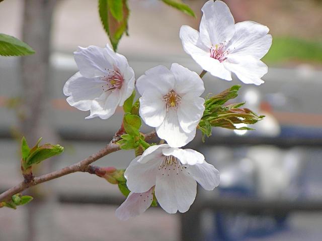 2007-Spring047.jpg
