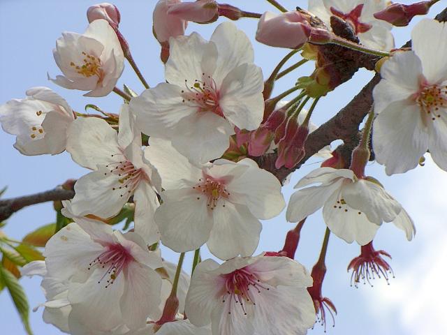 2007-Spring049.jpg