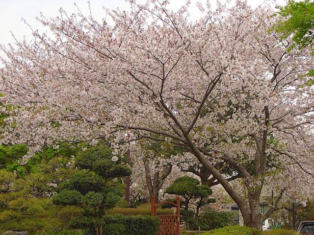 2007-Spring051.jpg