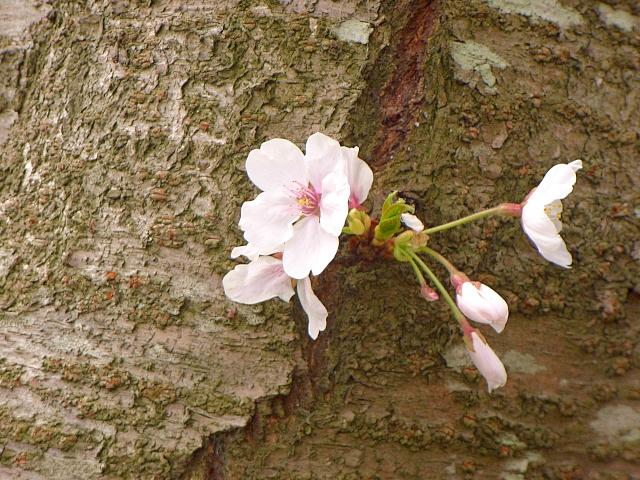 2007-Spring053.jpg