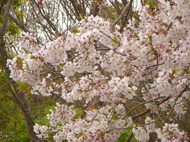 2007-Spring054.jpg