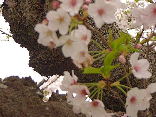 2007-Spring055.jpg