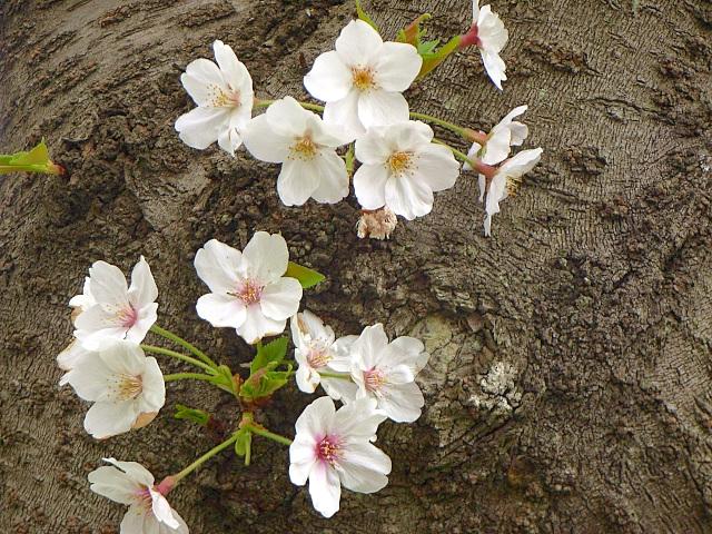 2007-Spring056.jpg