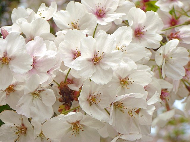 2007-Spring057.jpg