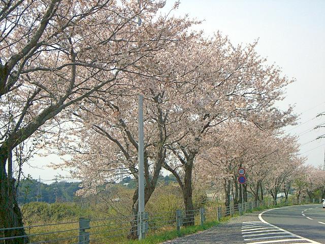 2008-Spring0001
