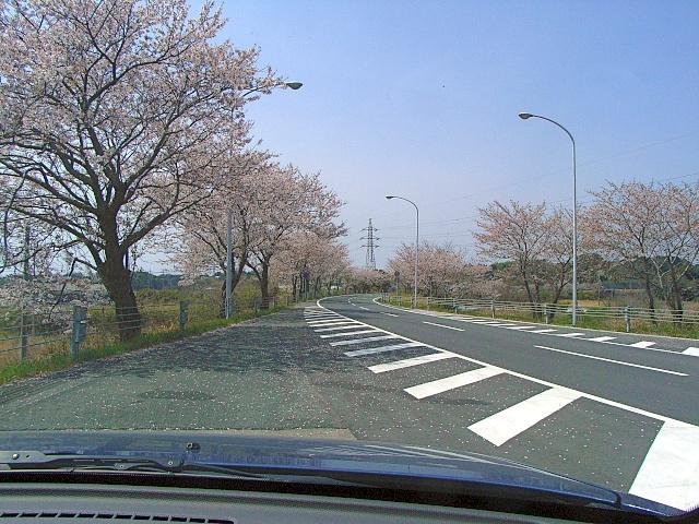 2008-Spring0002