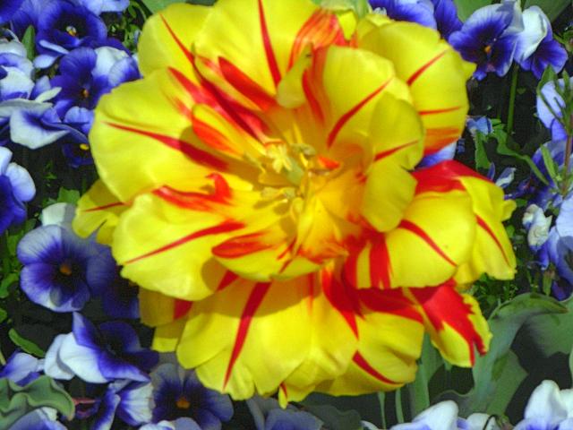 2008-Spring0011