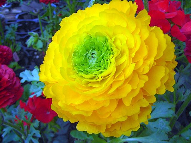 2008-Spring0026