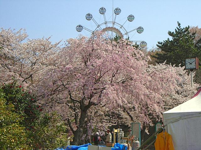 2008-Spring0033