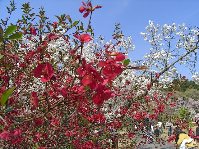 2008-Spring0047