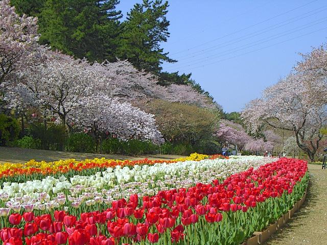 2008-Spring0074