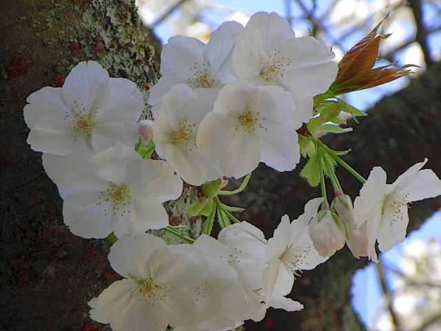 2008-Spring0080