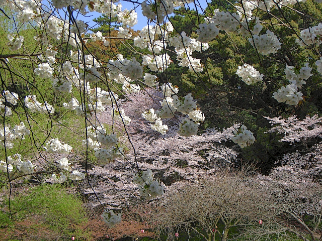 2008-Spring0081