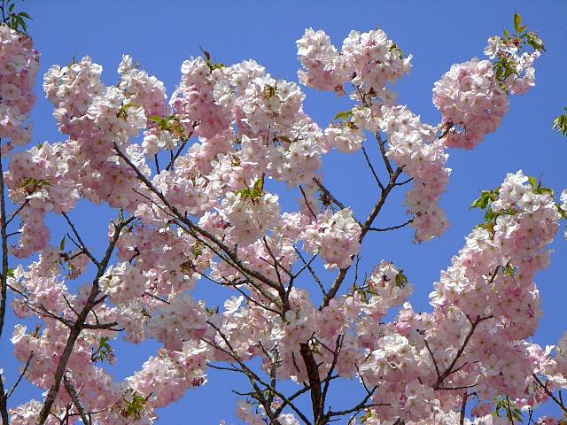 2008-Spring0083