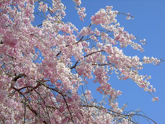 2008-Spring0089