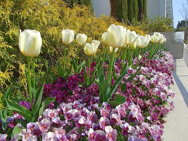 2008-Spring0102.jpg