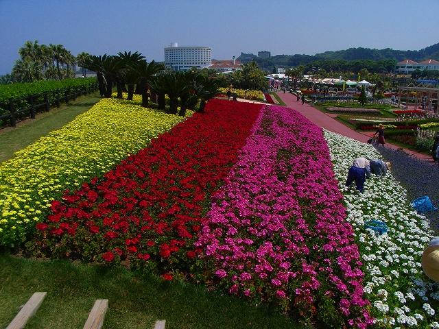 flower festa-13.jpg