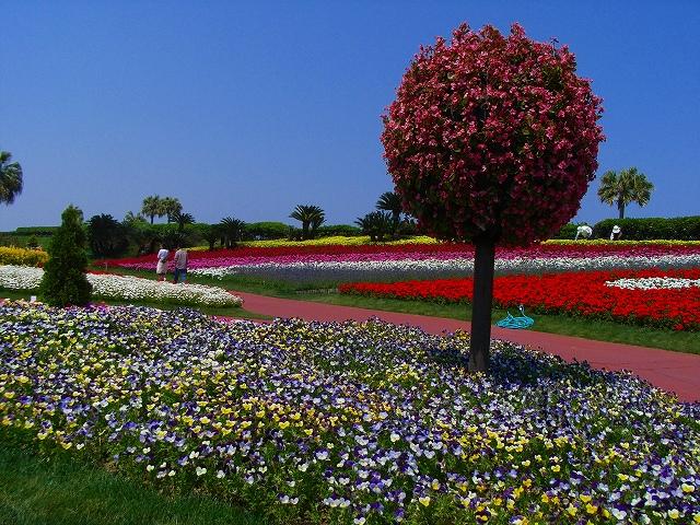 flower festa-17.jpg