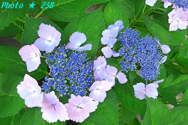 AJISAI1206-04.jpg