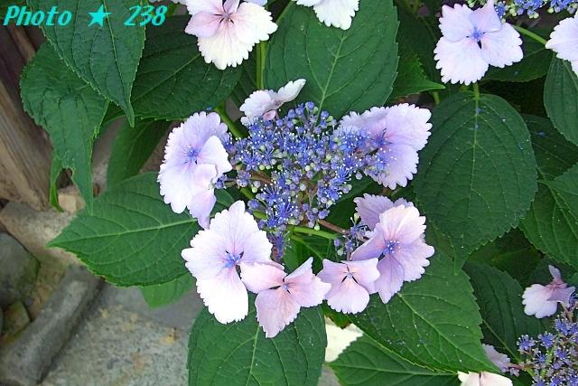 AJISAI1206-06.jpg