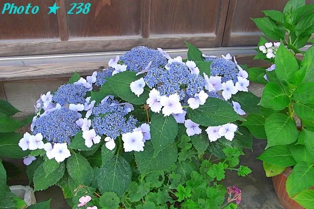 AJISAI1206-07.jpg
