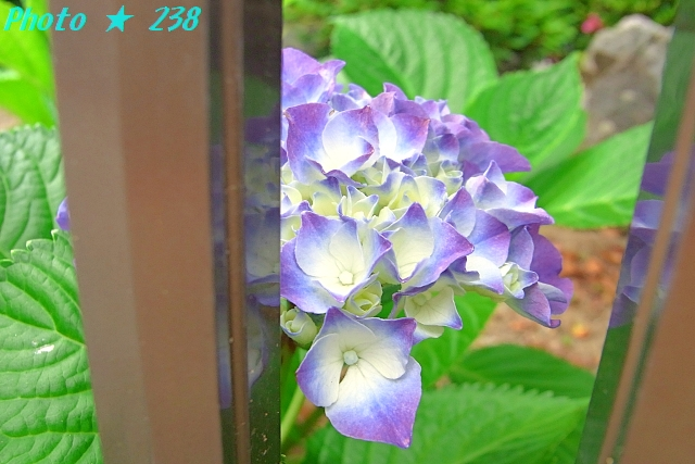 AJISAI1206-10.jpg