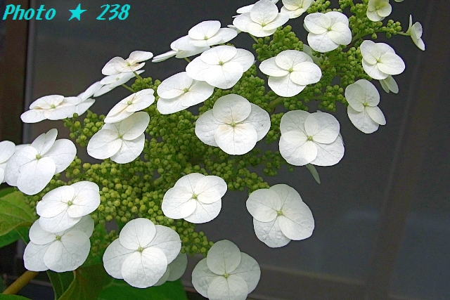 AJISAI1206-14.jpg