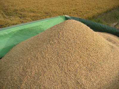 新米収穫06