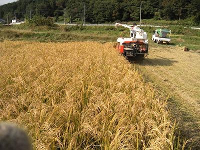 新米収穫04