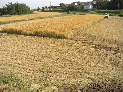 新米収穫03