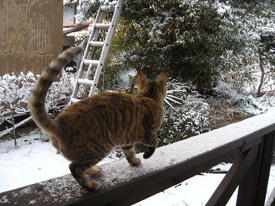 ジルダ 初雪02